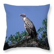 Ruppells Griffon Vulture Throw Pillow