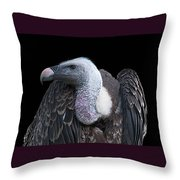 Ruppel's Griffon On Black Throw Pillow