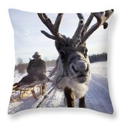 Russia, Siberia, Reindeer Sledding Trip Throw Pillow