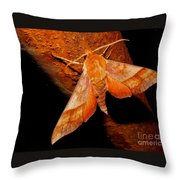 Rusty Sphinx Moth Throw Pillow