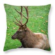 Rut Rest Throw Pillow