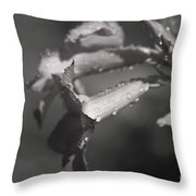 Sabi Star Throw Pillow