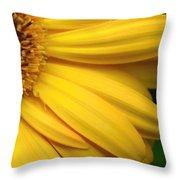 Sac331d-005 Throw Pillow