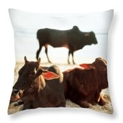 Sacred Cows On The Beach Throw Pillow by Carol Whaley Addassi