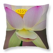 Sacred Lotus Blossom Throw Pillow