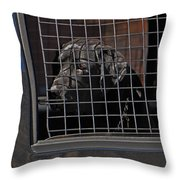 Sad And Tired K9 Throw Pillow