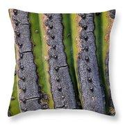 Saguaro Cactus Close-up Throw Pillow