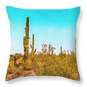 Saguaro Cactus In Organ Pipe Monument Throw Pillow