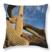Saguaro Cactus Saguaro Np Arizona Throw Pillow