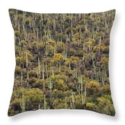 Saguaro Forest At The Foot Of Four Peaks Throw Pillow