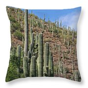 Saguaro Forest In The Superstitions Throw Pillow