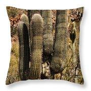 Saguaro Of Many Arms Throw Pillow