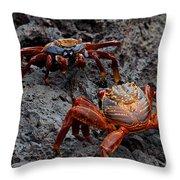 Sally Light Foot Crabs Galapagos Throw Pillow