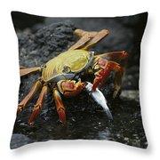 Sally Lightfoot Crab Feeing Galapagos Throw Pillow