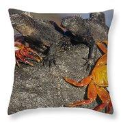 Sally Lightfoot Crabs And Marine Throw Pillow