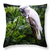 Salmon Crested Cockatoo Throw Pillow by Sennie Pierson