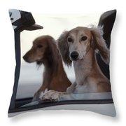 Saluki Dogs In Car Throw Pillow