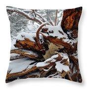 San Jacinto Fallen Tree Throw Pillow