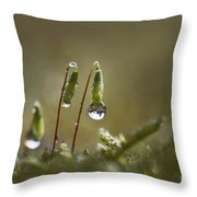 Sanctuary Of Light Throw Pillow
