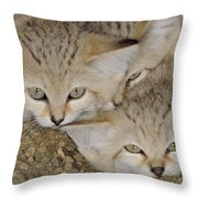 Sand Cat Felis Margarita Throw Pillow