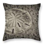 Sand Dollar 3 Black And White Botany Bay Throw Pillow