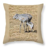 Sand Hill Cranes Eat Togeather Throw Pillow