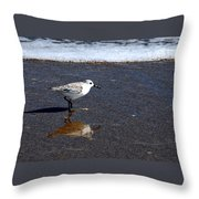 Sanderling 004 Throw Pillow