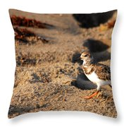 Sanderling 005 Throw Pillow