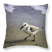 Sanderling On The Shore Throw Pillow