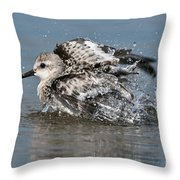 Sanderling Pictures 29 Throw Pillow