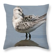 Sanderling Pictures 32 Throw Pillow