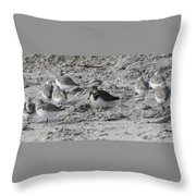 Sanderlings And A Ruddy Throw Pillow
