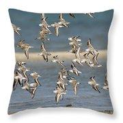 Sanderlings And Dunlins In Flight Throw Pillow