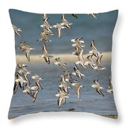 Sanderlings And Dunlins In Flight Throw Pillow