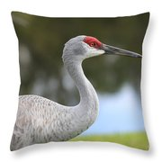 Sandhill And Friend Throw Pillow