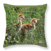 Sandhill Chicks Throw Pillow