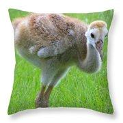 Sandhill Crane Chick I Throw Pillow