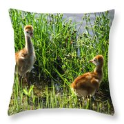 Sandhill Crane Chicks  Throw Pillow