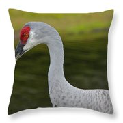 Sandhill Crane Close Up Throw Pillow