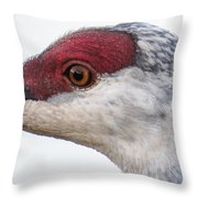 Sandhill Crane Eye Throw Pillow