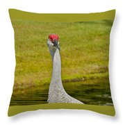 Sandhill Crane Face-on Throw Pillow