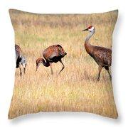 Sandhill Crane Family I Throw Pillow