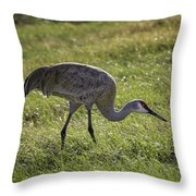 Sandhill Crane Throw Pillow