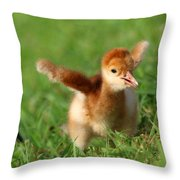 Sandhill Crane Hatch Day Throw Pillow