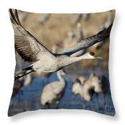 Sandhill Crane Lift Off Throw Pillow