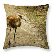 Sandhill Crane On The Road Throw Pillow