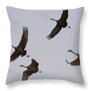 Sandhill Crane Quartet Throw Pillow