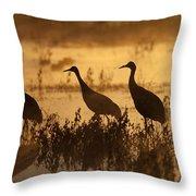 Sandhill Crane Trio At Sunrise Bosque Throw Pillow
