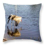 Sandhill Crane Vs Alligator Throw Pillow