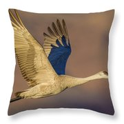 Sandhill Crane Young Adult Throw Pillow